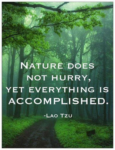 nature_does_not_hurry
